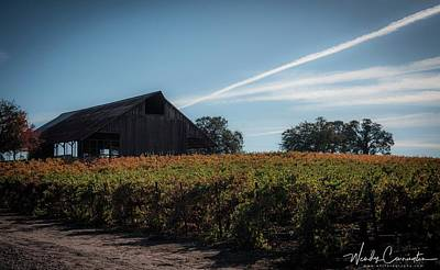 Photograph - Fall Vineyard by Wendy Carrington