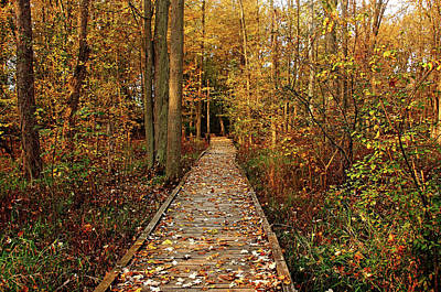 Photograph - Fall Walk by Debbie Oppermann