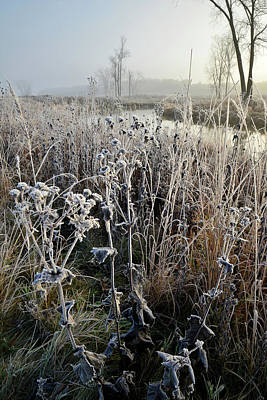 Photograph - Fall Wildflowers Covered In Frost Along Nippersink Creek by Ray Mathis