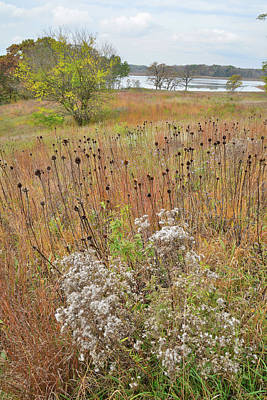 Photograph - Fall Wildflowers In Moraine Hills by Ray Mathis