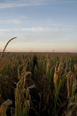 Photograph - Fall Wind Fields V by Dylan Punke