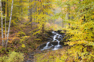 Photograph - Fall Woodland Waterfall by Alan L Graham