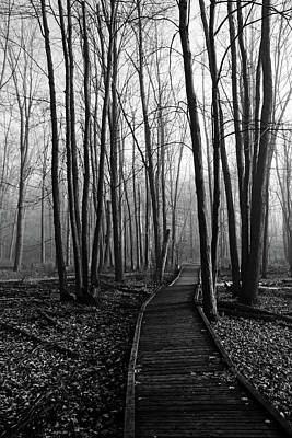 Photograph - Fall Woods Black And White by Debbie Oppermann
