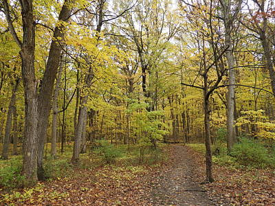 Photograph - Fall Woods by Red Cross