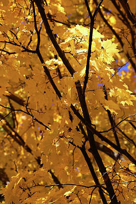 Photograph - Fall Yellow 20 by Mary Bedy