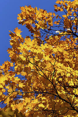 Photograph - Fall Yellow 21 by Mary Bedy