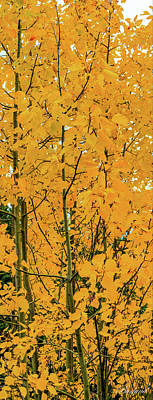 Photograph - Fall Yellow by Burland McCormick