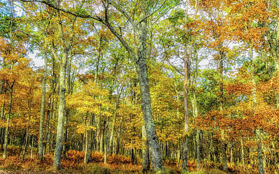 Photograph - Fall Yellow by Joe Shrader