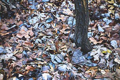 Photograph - Fallen #1 by Patti Schulze