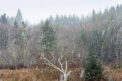 Photograph - Fallen Alder With Snow by Robert Potts