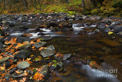 Skate Creek Photograph - Fallen Along The Way by Mike Dawson