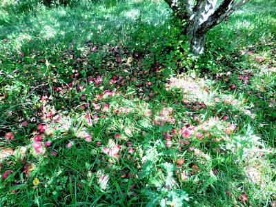 Organic Digital Art - Fallen Appless In The Garden 1 by Lanjee Chee