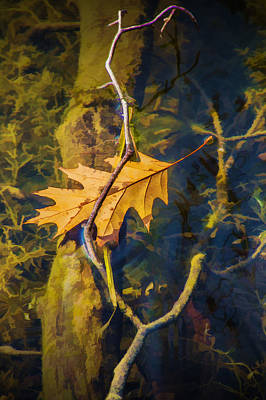 Photograph - Fallen Autumn Leaf In The Water by Randall Nyhof