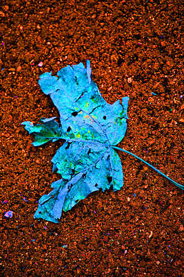Photograph - Fallen Autumn Leaf On The Path by Marie Jamieson