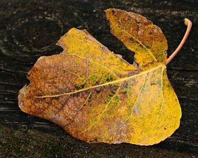 Photograph - Fallen Beauty by I'ina Van Lawick