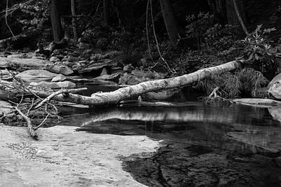 Photograph - Fallen Birch by Jeff Severson