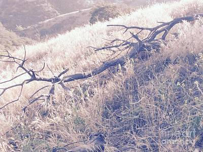 Claremont Photograph - Fallen Branch Beside A Field Of Gold by Leah McPhail