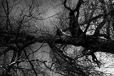 Photograph - Fallen Dark Wood Forest by Benjamin Wiedmann