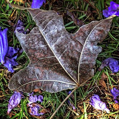 Photograph - Fallen by Deborah Ann Stott