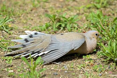 Photograph - Fallen Dove by Bonfire Photography