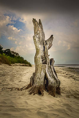 Photograph - Fallen Driftwood by Chris Bordeleau