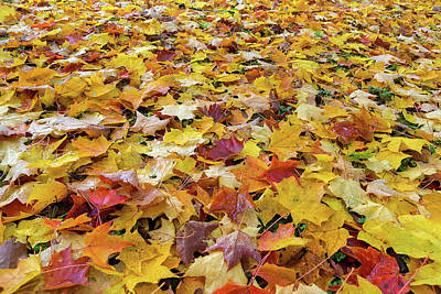 Photograph - Fallen Fall Color Leaves On Parks Ground by Jit Lim
