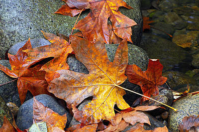 Photograph - Fallen Fall Leaves by Sharon Talson
