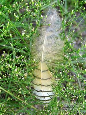 Photograph - Fallen Feather by D Hackett