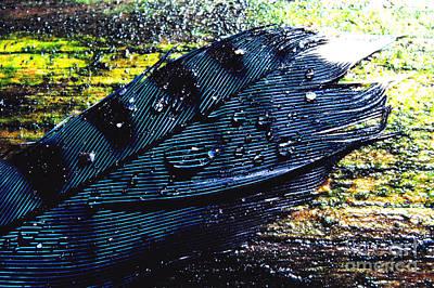 Cyanocitta Cristata Photograph - Fallen Feather by Thomas R Fletcher