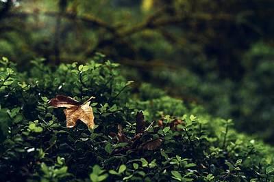 Photograph - The Fallen by Gene Garnace