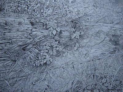 Fallen Leaf Drawing - Fallen Giant  by Catherine Robertson