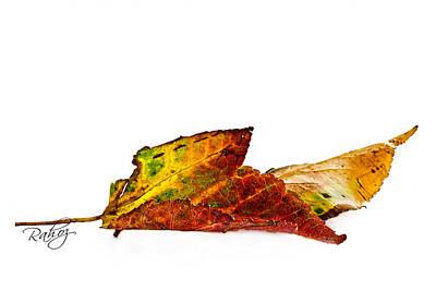Fallen In Fall  Art Print by Rahat Iram