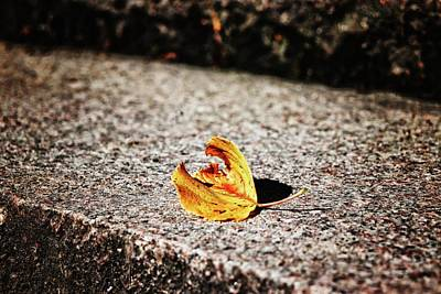 Photograph - Fallen by Karen Stahlros