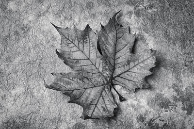 Photograph - Fallen Leaf Black And White by Garry Gay