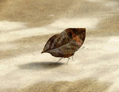 Photograph - Fallen Leaf - Butterfly by MTBobbins Photography