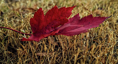 Photograph - Fallen Leaf by Elijah Knight