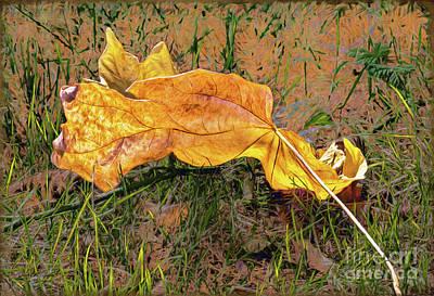 Photograph - Fallen Leaf by Jean OKeeffe Macro Abundance Art