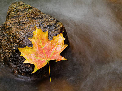 Stream Photograph - Fallen Leaf by Jim DeLillo