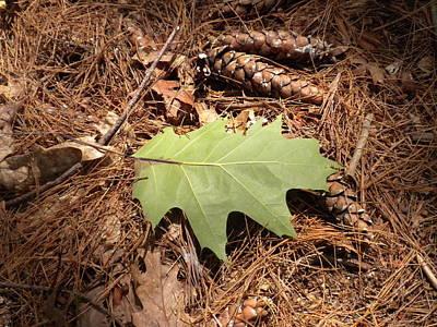 Fallen Leaf Art Print by Karen Moulder