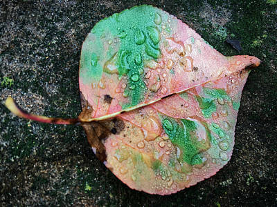 Photograph - Fallen Leaf by Nathan Little