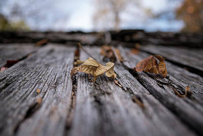 Photograph - Fallen Leaf On A Rustic Shed by Doug Ash