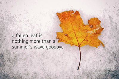 Photograph - Fallen Leaf On Dirty Ice With Quote by Giuseppe Esposito