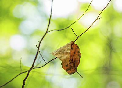 Photograph - Fallen Leaf On Green by Brooke T Ryan