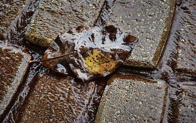 Photograph - Fallen Leaf On Rain-soaked Bricks by Greg Jackson