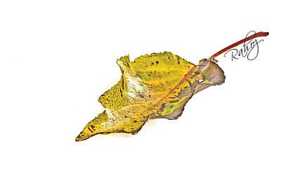 Fallen Leaf Art Print by Rahat Iram