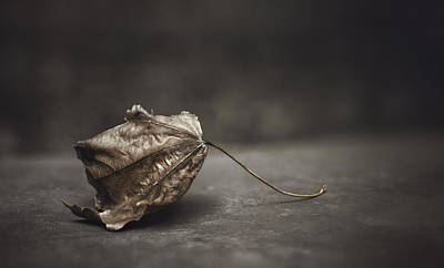 Contemplative Photograph - Fallen Leaf by Scott Norris
