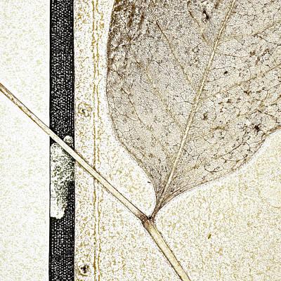 Zen Digital Art - Fallen Leaf Two Of Two by Carol Leigh