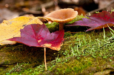 Photograph - Fallen Leaves And Mushrooms by Brent L Ander
