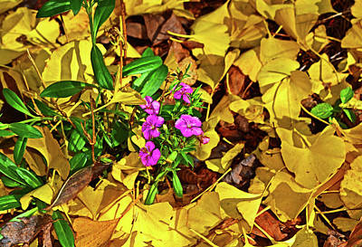 Photograph - Fallen Leaves And Purple Flowers 001 by George Bostian