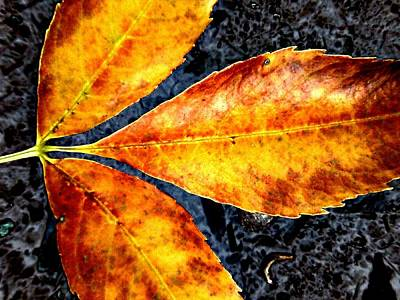 Fallen Leaves Art Print by Beth Akerman